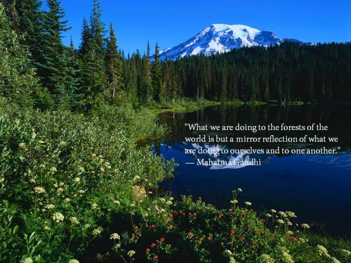 What we are doing to the forests